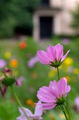 Blumenwiese im Stadtpark