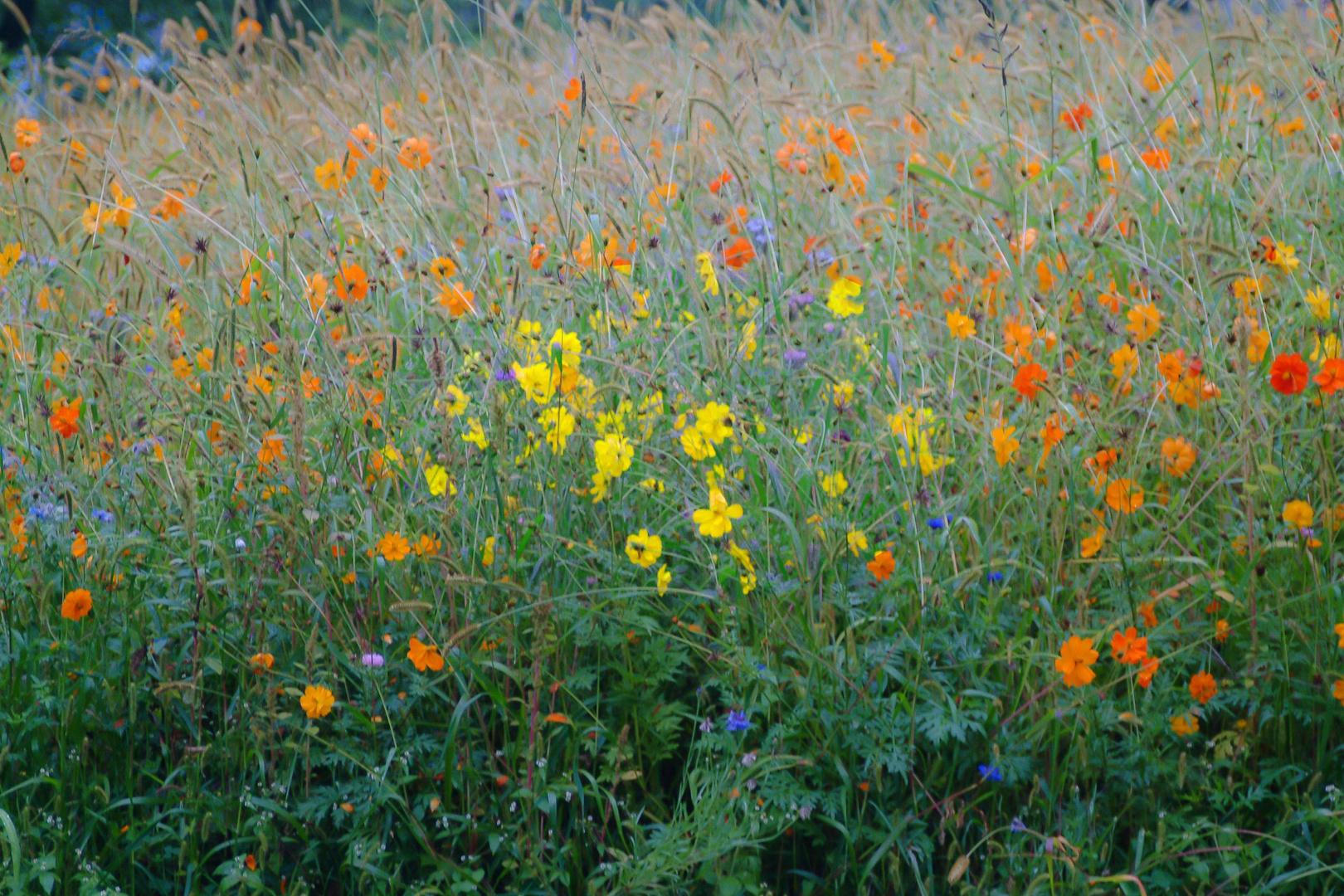 Blumenwiese in Evian 3