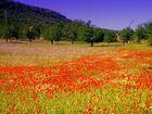 Blumenwiese Mallorca