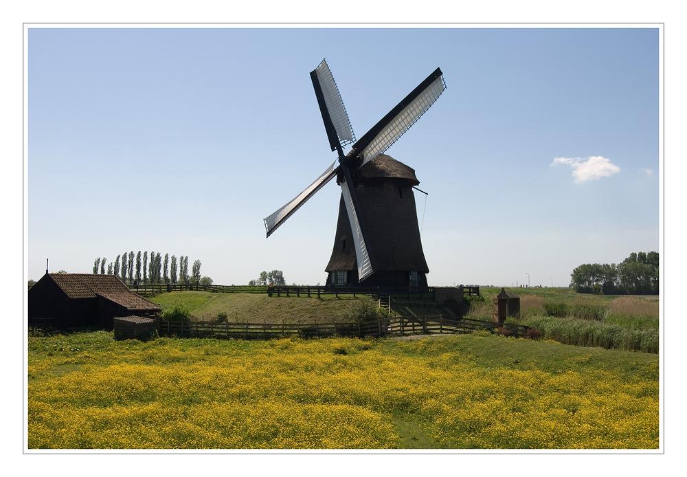 Blumenwiese mit Windmühle