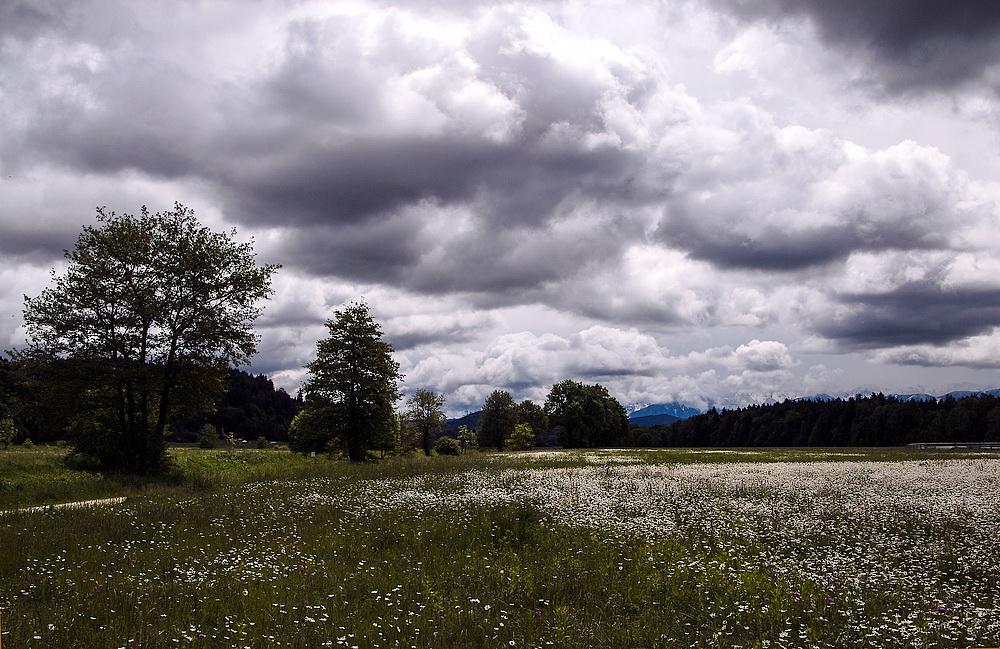 Blumenwiese nach dem Regen
