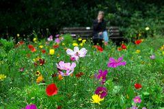 Blumenwiese statt Blumenbeet