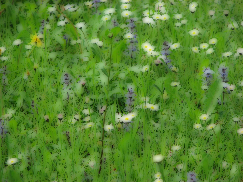 Blumenwiese - verfremdet