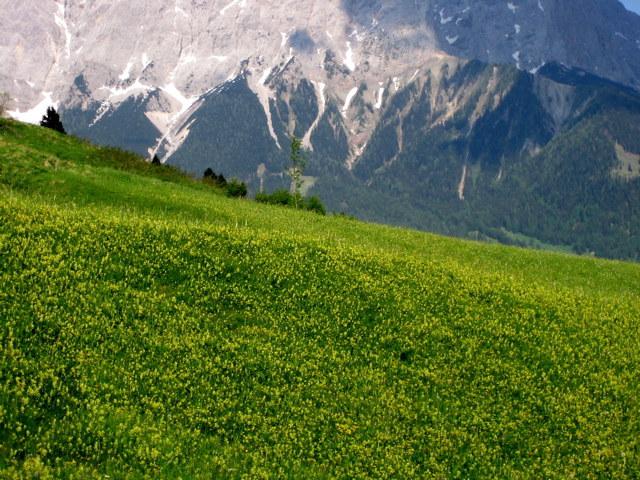Blumenwiese vor Bergkulisse