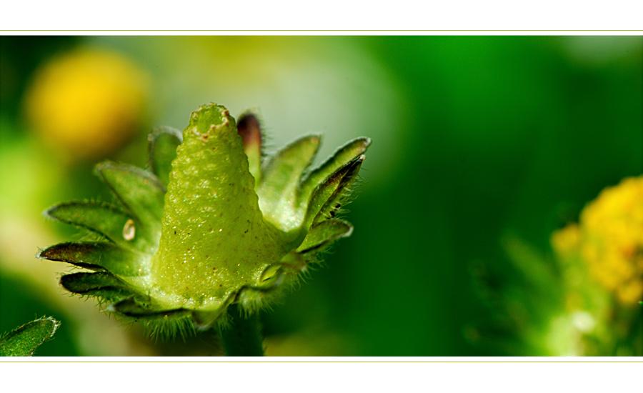 Blumenwiese_18