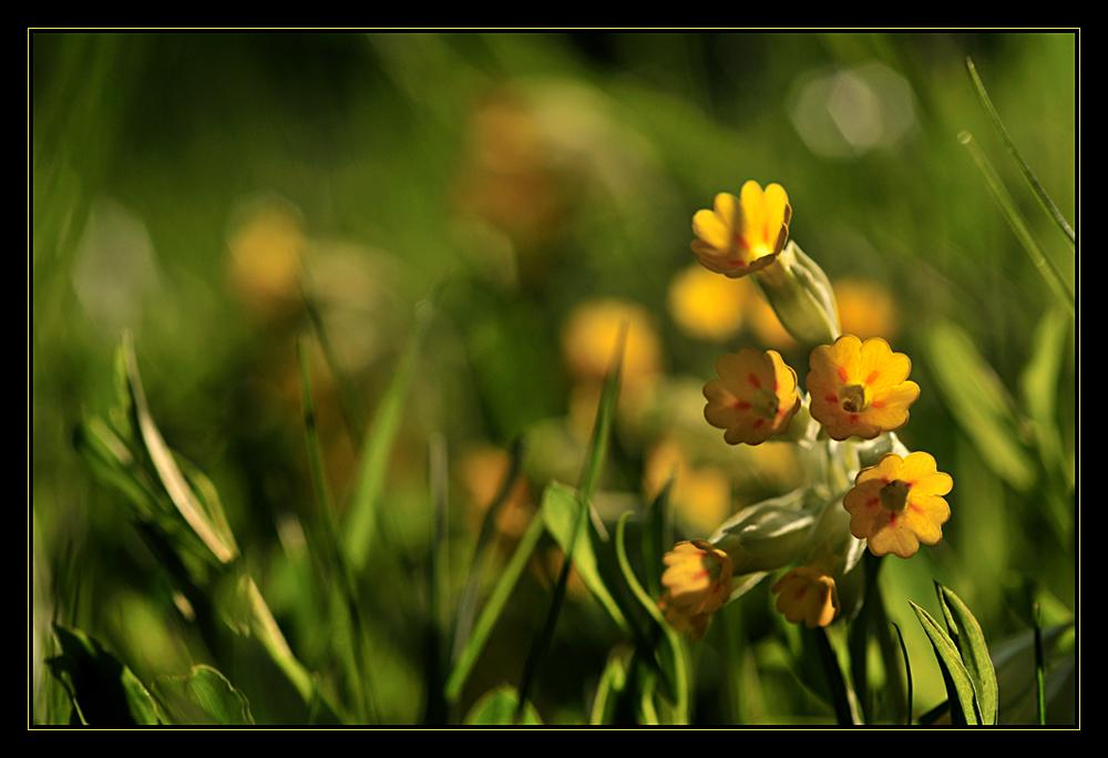 blumenwiese_2008_02
