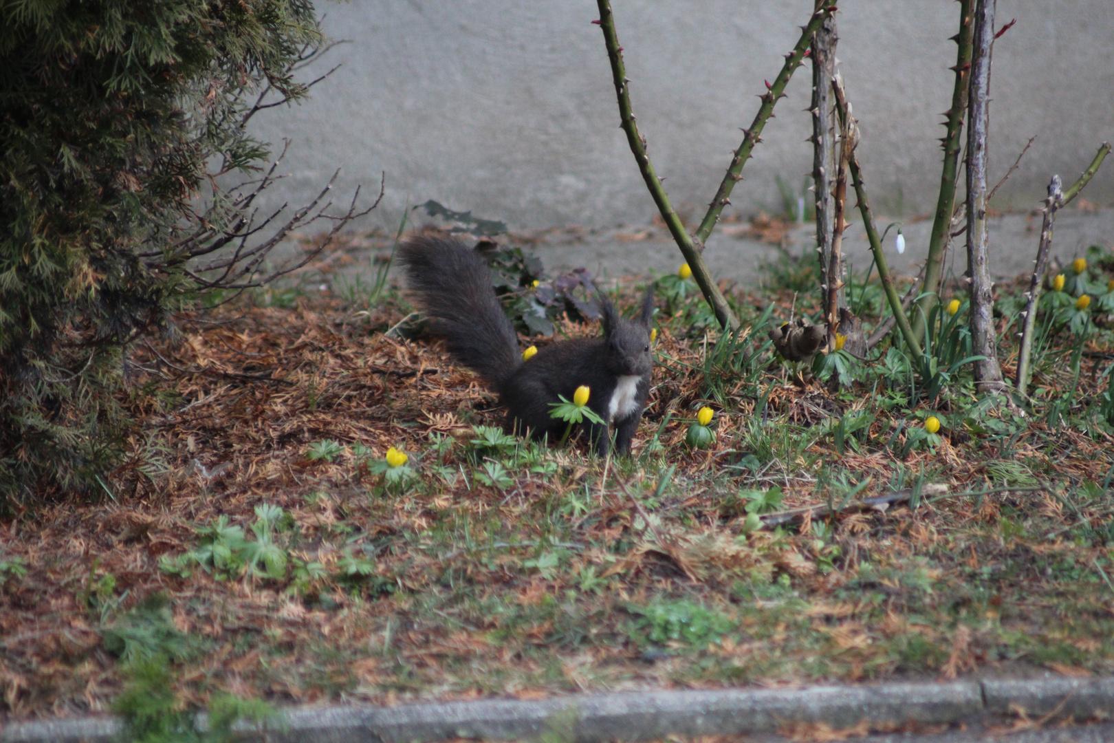 Blumiges Hörnchen