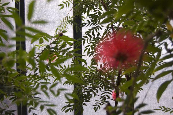 Blurred flower