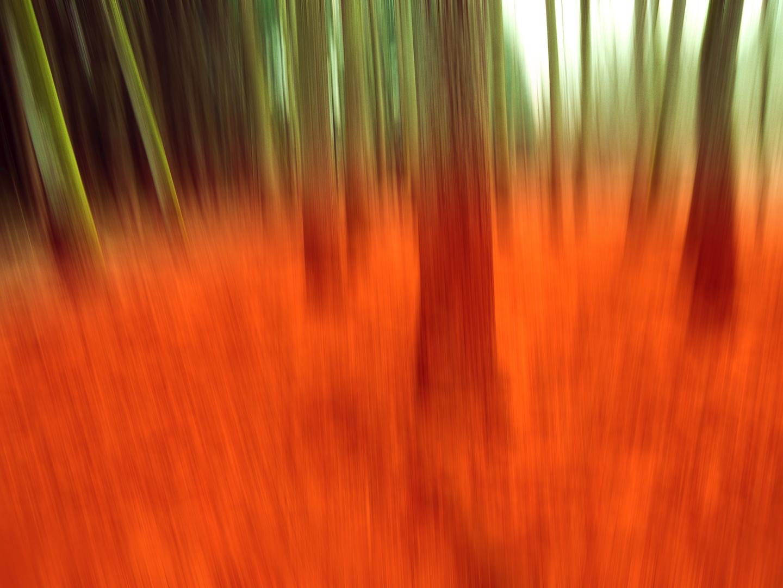 Blurred Woods