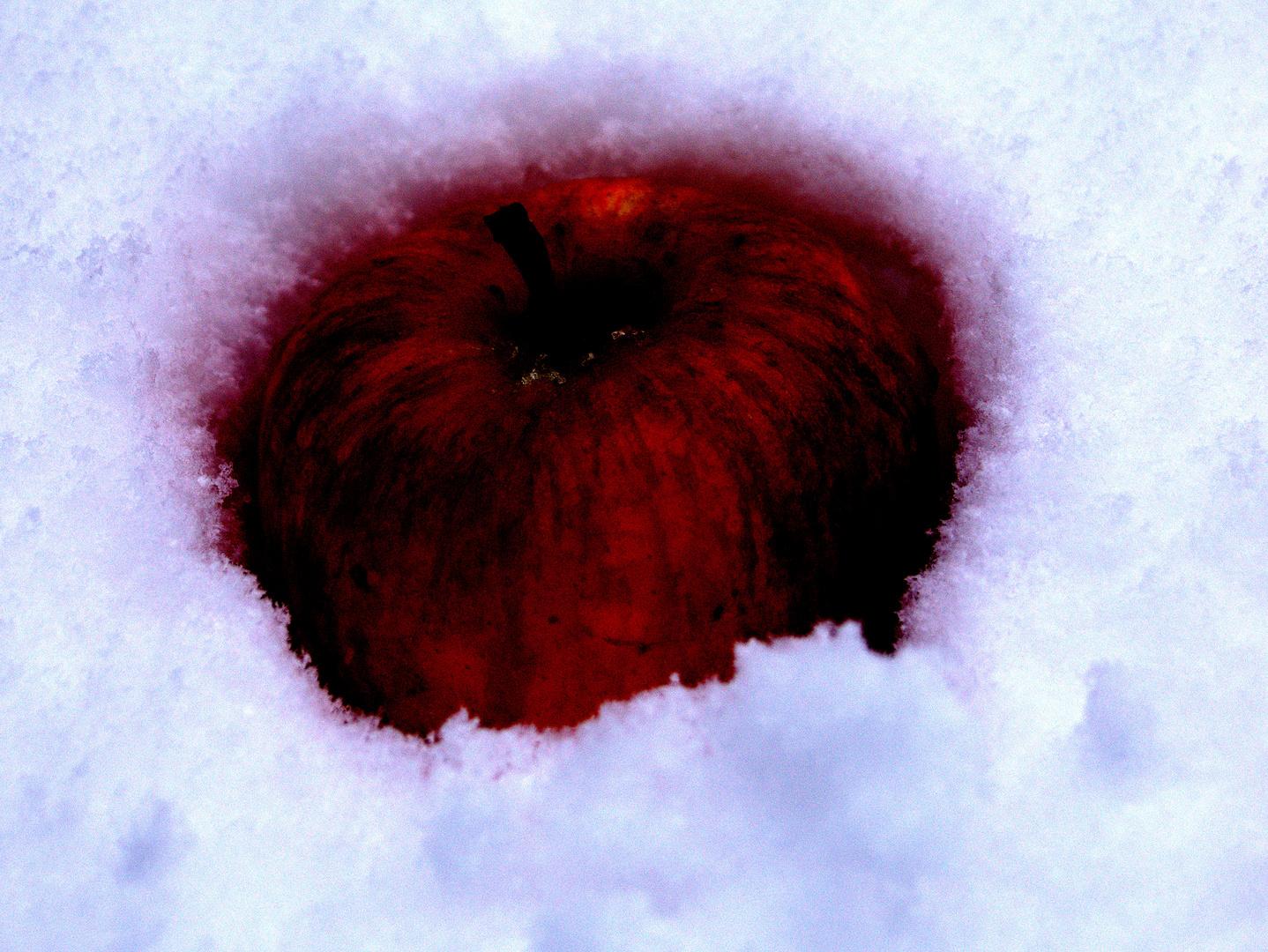 blutroter Apfel im Schnee