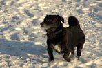 Bobby im Schnee :-)