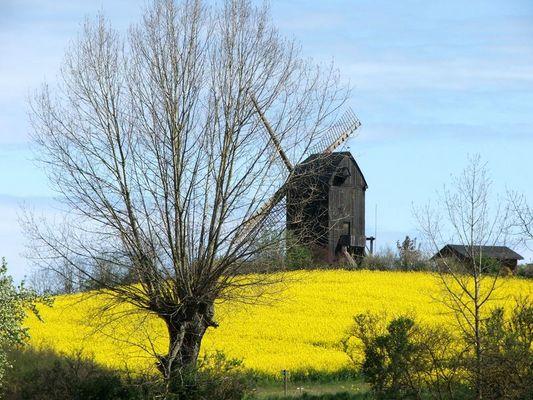 Bockmühle auf Usedom