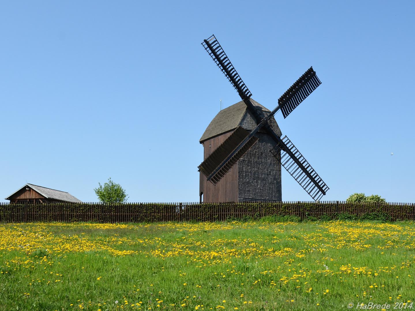 Bockwindmühle im Frühling