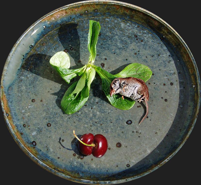 Bocuse - Nouvelle Cuisine