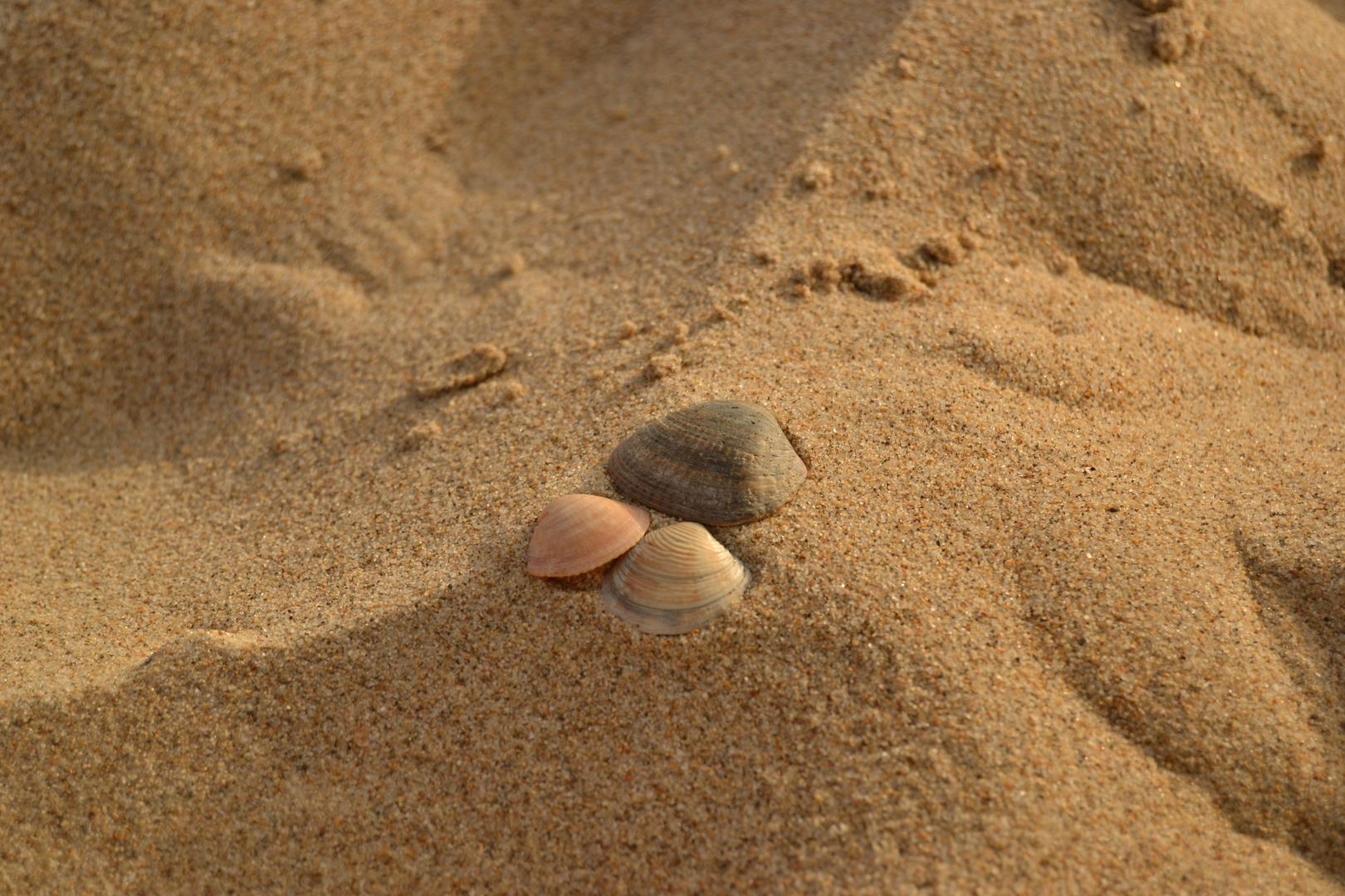 Bodegon de conchas