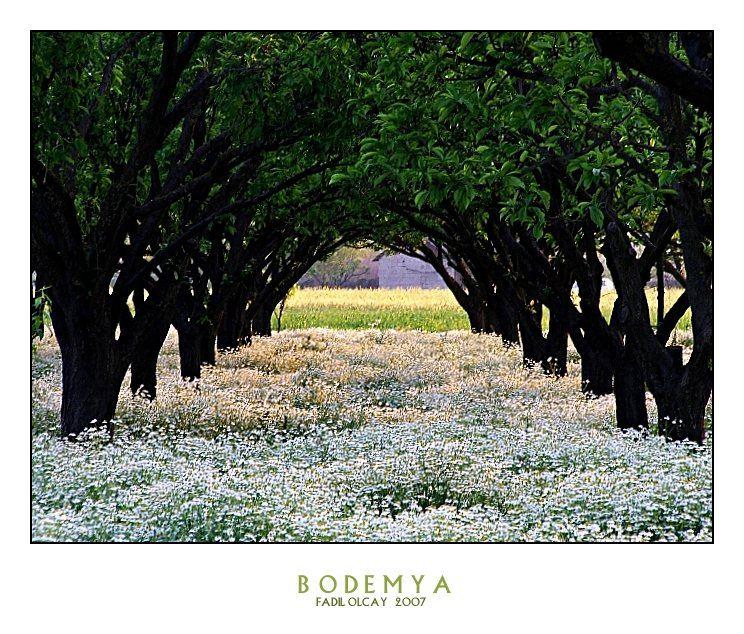 BODEMYA