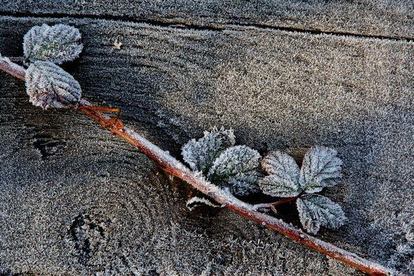 Bodenfrost...