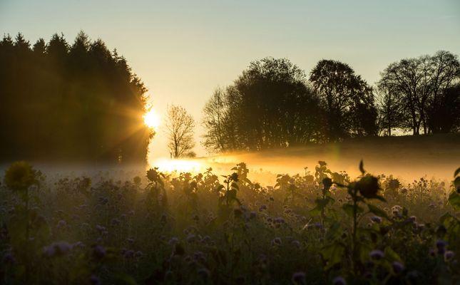** Bodennebel im Sonnenaufgang **