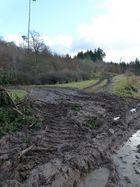 Bodenschäden im Wald des Jahres 2014