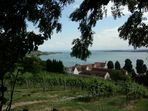 Bodensee (1)