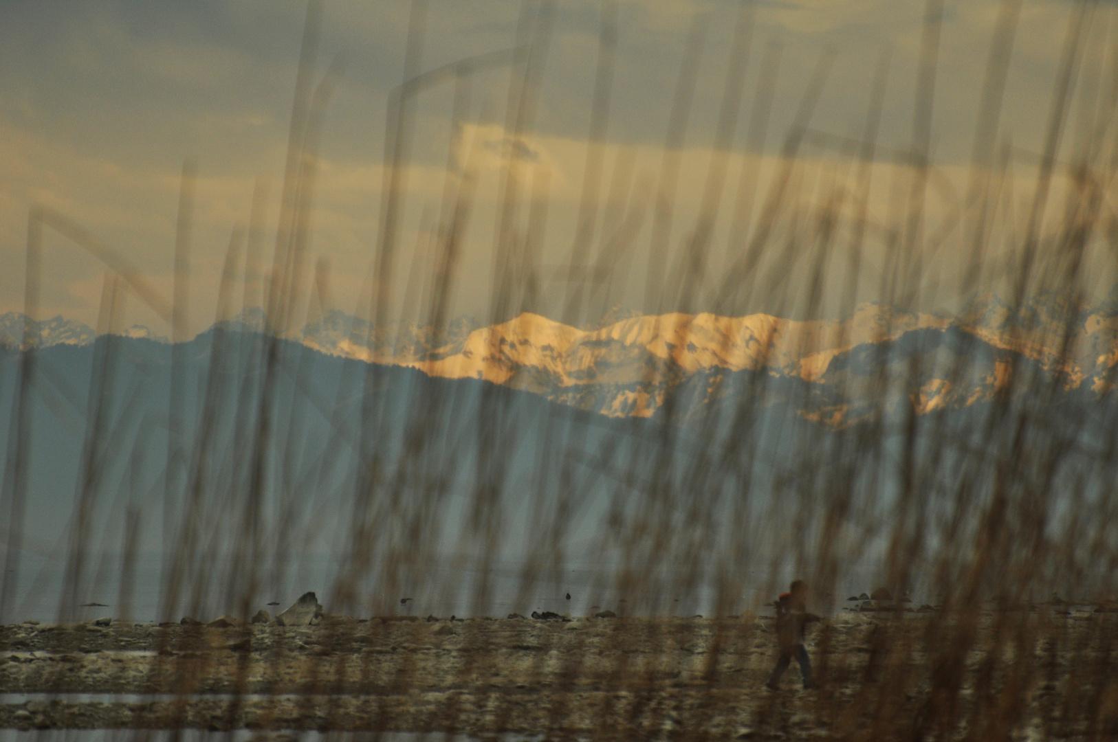 Bodensee -- Altnau
