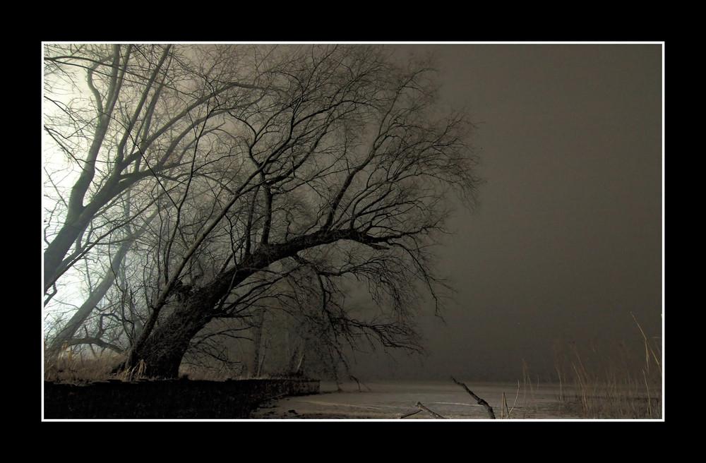 Bodensee bei Nacht III