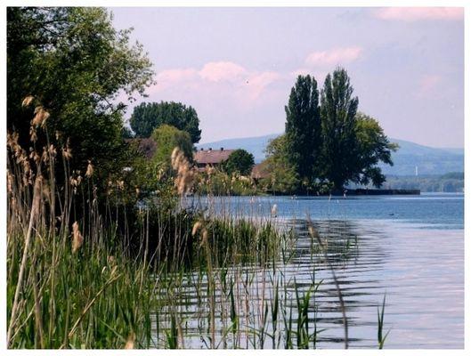 Bodensee, Insel Reichenau