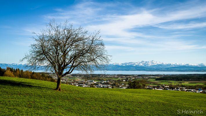 Bodensee mit Sicht auf die Alpen
