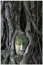 Bodhy tree, Ayutthaya