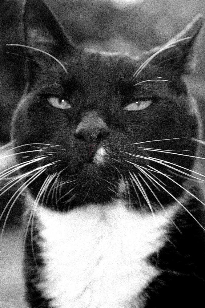 """""""böse"""" Katze"""