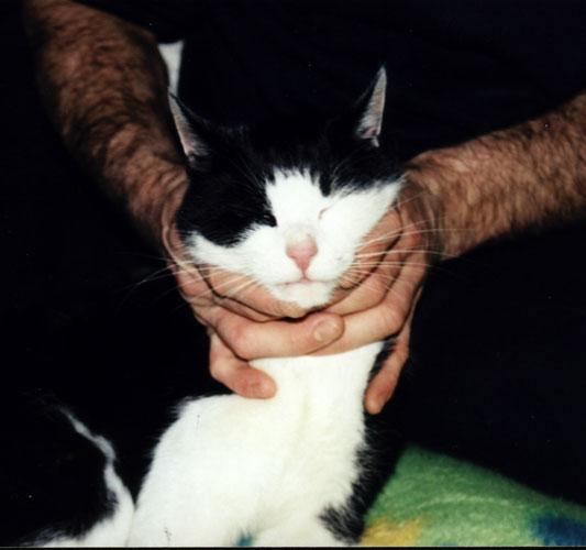 böse Katze ;-)