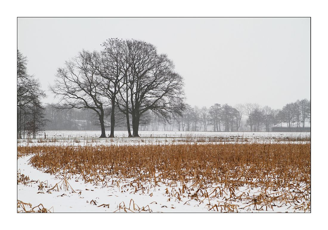 Bösel im Winter 1