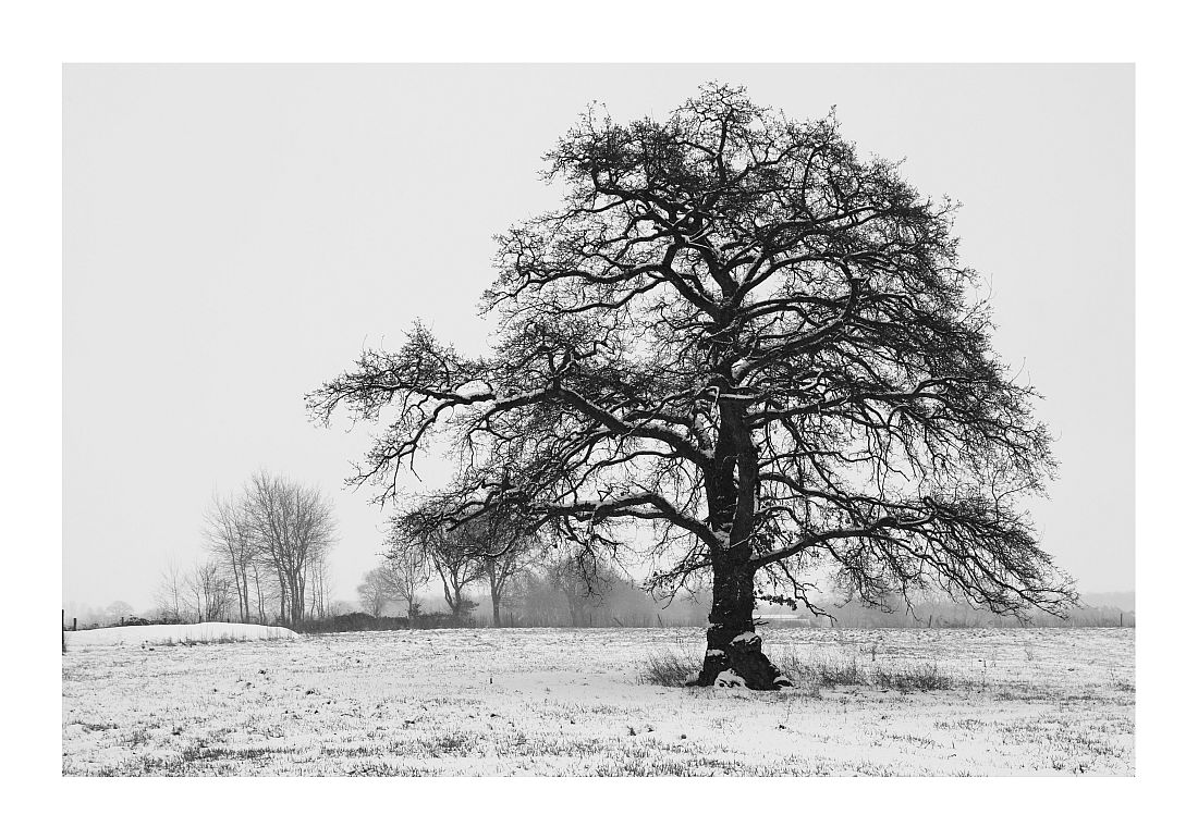 Bösel im Winter