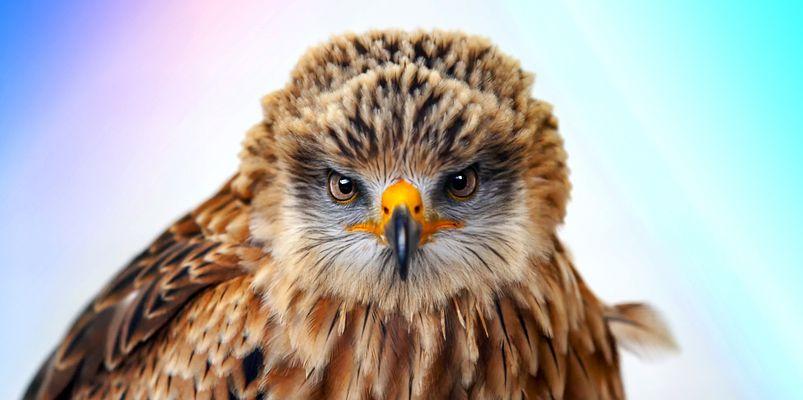 Böser Blick !!
