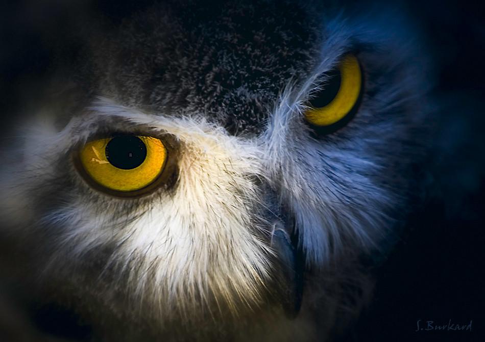 Böser Blick