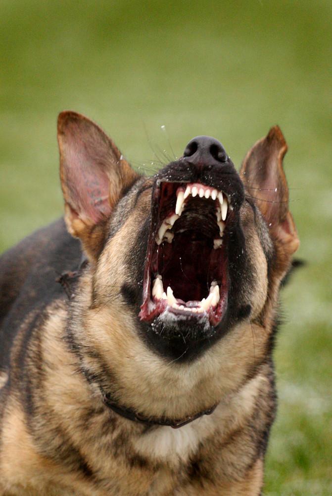 Böser Hund!