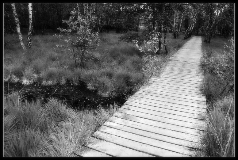 Bohlenweg im Wittmoor