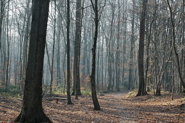 bois et repos d'automne