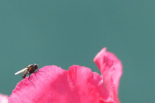 Bokeh de petite mouche sur fleur
