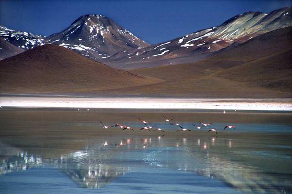 Bolivien - Flamingos über Laguna Verde