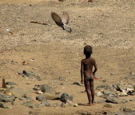 Bombay Wildlife 3