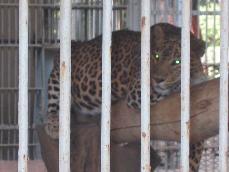 bombay zoo