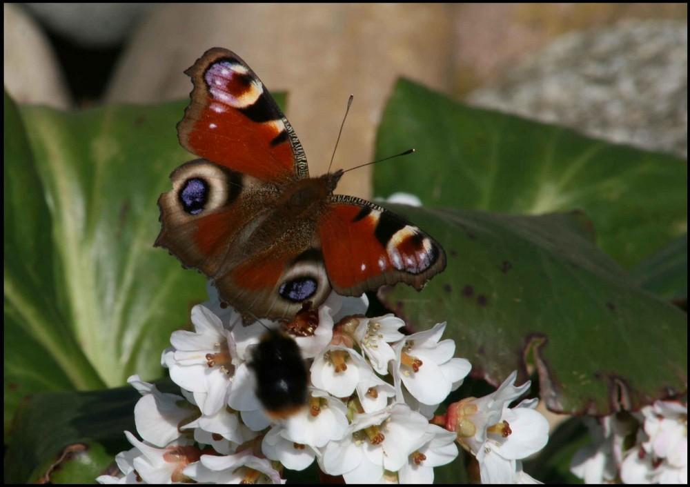 Bombo fa visita alla farfalle