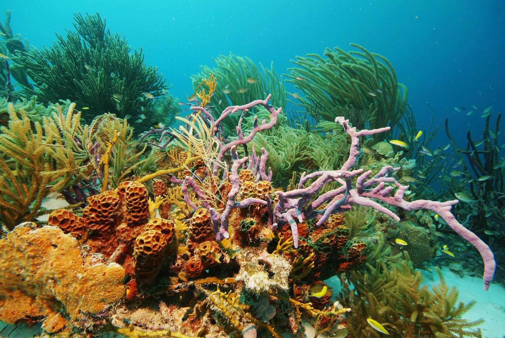 Bonaire-Unterwasser - Korallen - Schwämme