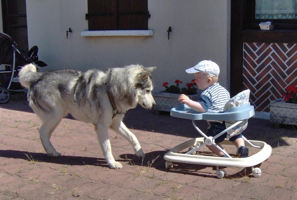 bonjour ,je suis le chien ! et moi l'homme !( ou presque)
