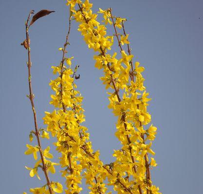 Bonjour printemps, au revoir hiver !