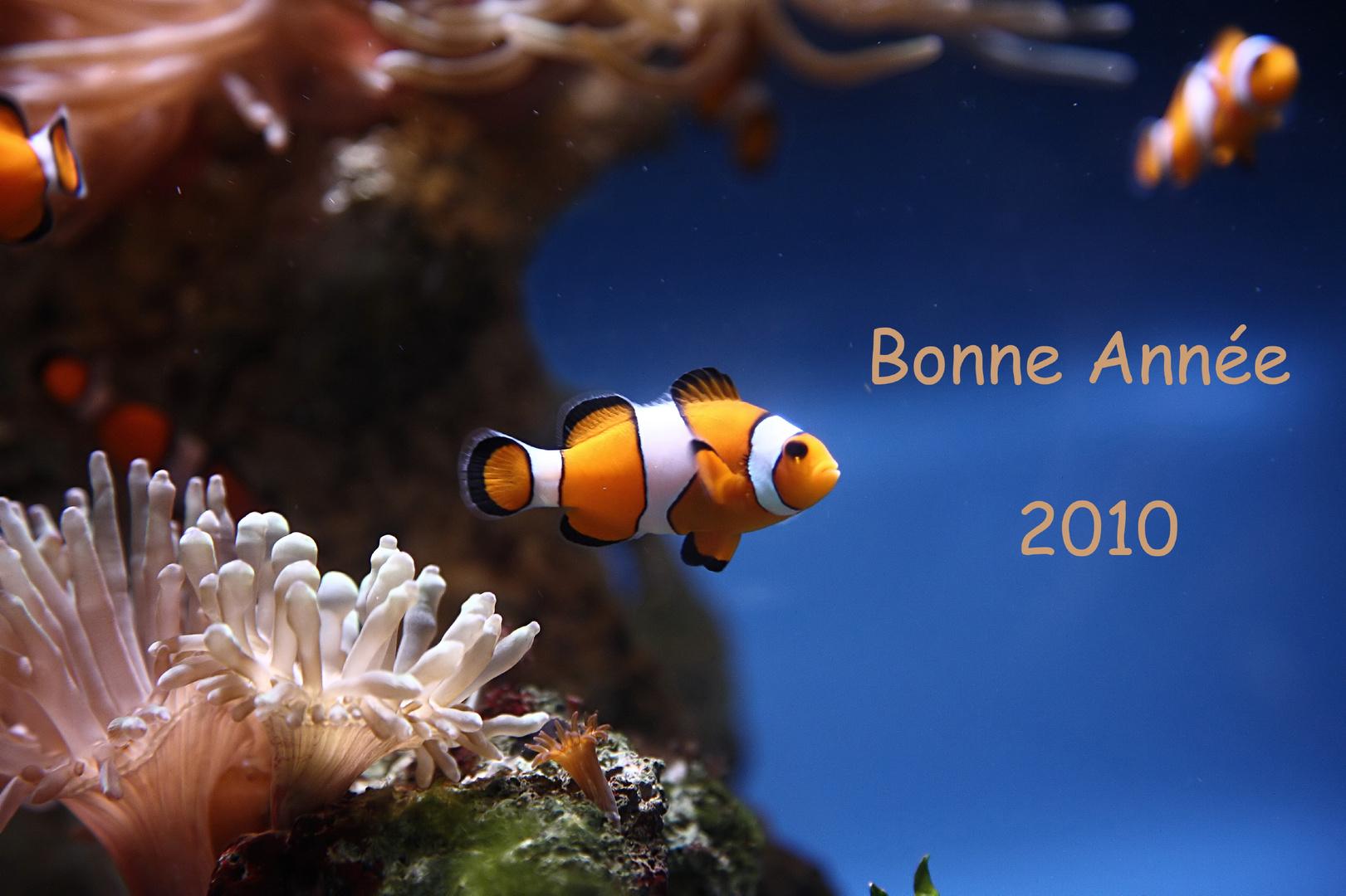 Bonne Année 2010 à toutes et tous