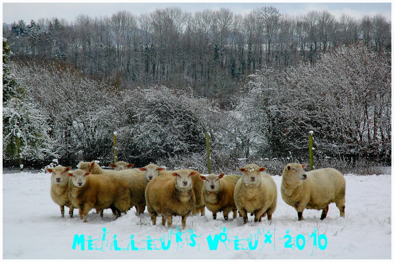 Bonne année 2010 de Normandie