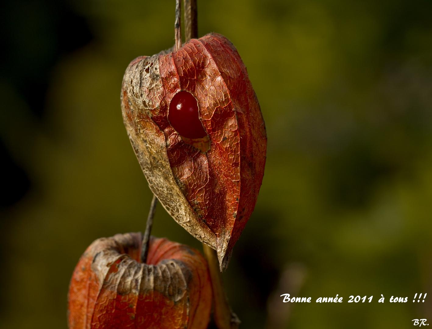 Bonne année 2011 à tous !!!!