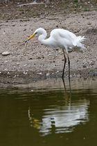 Bonne pioche....ou bonne pêche
